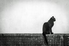 Black cat   Bastet