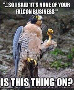None of your falcon business!