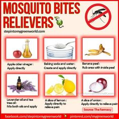 how to treat mosquito bites - Google Search