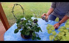 Zahrádkářská poradna   Primadoma.tv Fruit, Tv, Plants, Television Set, Plant, Planets, Television