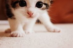 I'm not a cat person but my younger daughter has been talking about wanting one for a long long time.. This is too cute!