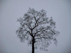 tree looks like...