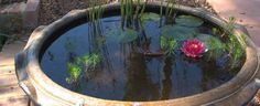 bowl for fish pond - : Yahoo Image Search Results