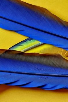 Feathers in Yellow and Blue
