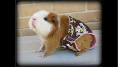Este hámster disfruta del calor del verano, en una bonita trusa hecha a su medida.