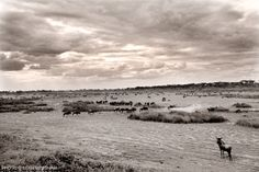 Beautiful dramatic photo of the great migration in the Serengeti by Photographic Journalist Sean Messham The Great Migration, Dramatic Photos, Wildlife Photography, Wilderness, Landscapes, African, Space, Day, Amazing