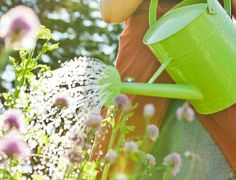 Playing nice with the planet includes conserving resources, and good old H2O is at the top of the list. Every gardener can cut down on water waste at home with a few simple changes.