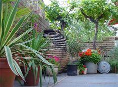 Mediterrane planten in pot