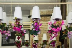 Hanging Pots 1