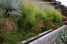 """""""I love this evergreen combination of bamboo muhly, firecracker fern (Russelia equisetiformis), and some variety of palm, with Yucca rostrata..."""""""