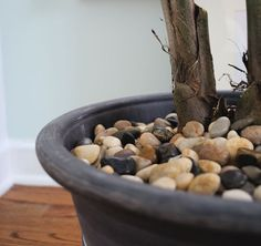 Rocks over the dirt on potted plants.