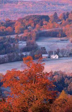 Earliest autumn, light and dark, apples