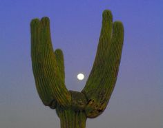C 3 T Cacti And Succulents, Cactus Plants, The Moon Is Beautiful, No Bad Days, Fallout New Vegas, Night Vale, Wild And Free, Retro, Deserts