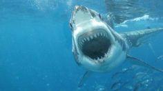 Qué susto! Padre retrata a su niño surfeando sobre tiburón | Ve...
