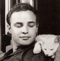 Google Image Result for http://favim.com/orig/201106/26/brando-cat-cats-marlo-brando-marlon-brando-vintage-Favim.com-84677.jpg