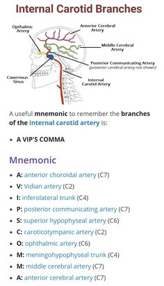 Branches of Internal Carotid Artery ...