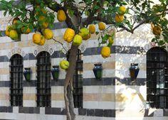 Courtyard in Damascus