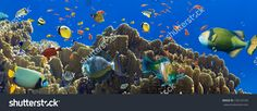 Coral And Fish In The Red Sea.Egypt Стоковые фотографии 130123169 : Shutterstock