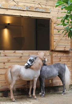 Adorable Miniature Horses Provide Those in Need With Love and Care