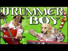 Dogs join Little Drummer Boy musical performance (VIDEO) » DogHeirs | Where Dogs Are Family « Keywords: Little Drummer Boy, music, holiday, Christmas