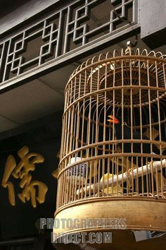 chinese bird cages   Stock Photography image of Chinese Bird Cage stock photo pd1645500.jpg