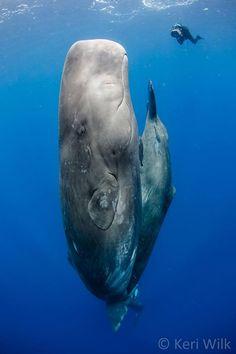Ci sono alcuni luoghi nel mondo dove si possono incontrare i veri giganti del mare.  Siete pronti?    http://bit.ly/i5Big   