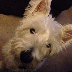 Oliver says Hi