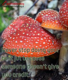 Never stop doing your best jut because someone doesn't give you credit. - TagesRandBemerkung