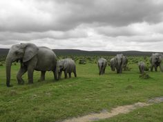 Addo Elephant National Park, South Africa...such a beautiful place <3