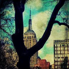 Empire State Building through the Trees by Christianna Pierce