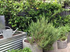 Modern fruit, vegetable and herb garden in Melbourne