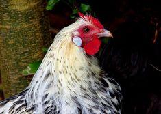 Bird Flu Scare on Duck Farm in Yorkshire - Writedge