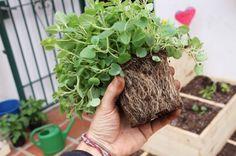 O CicloVivo separou algumas dicas e processos de como cultivar alimentos em casa.