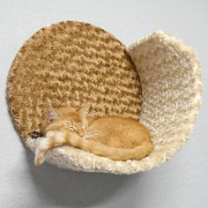 Wall Condo Cradle wall mounted cat furniture