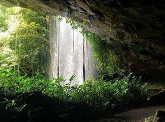 Dorrigo National Park,  Central Coast NSW