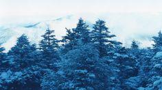 今週の注目Exhibition 野川かさね写真展『MOUNTAINS』