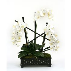 Distinctive Designs Silk Cream-White Phalaenopsis Orchids in a Black Leather Box with Studs Silk Orchids, Phalaenopsis Orchid, White Orchids, Silk Peonies, Silk Roses, Faux Flowers, Silk Flowers, Modern Holiday Decor, Real Rose Petals