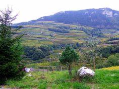 Schatzitaly (winery) - Trento, Italy