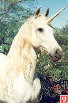 fashion is love. Cute Unicorn!!