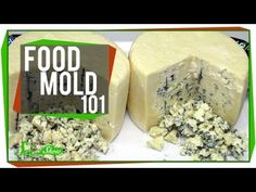 Food Mold 101 - YouTube