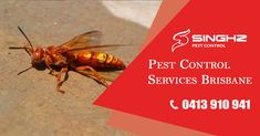 Looking for wasp pest control in #Brisbane? 📞 0413-910-941 for Consultation. #PestControl #PestRemoval #pests #fly #Flycontrol #problem #animal #insect #summer #business #home #shield #hygiene #wood #brisbane #brisbanehomes #brisbaneeats #brisbanecity #pestmanagement #pestcontrol #infestation #servicemaster #brisbane #brisbanecity