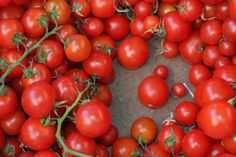 cherry toms at the market