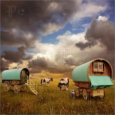 two gypsy wagons with gypsy vanner horses