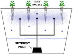 Aeroponic systems use a fine spray to deliver the nutrients and water to plants roots. Aeroponic systems produce the fastest growth in any hydroponic systems. The key to running a successful aeroponic systems is keeping the sprayers free from sediment so a fine mist can be sprayed on the plants roots.