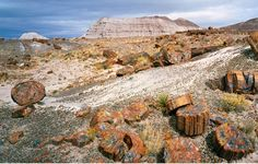 Petrified Forest National Park is located in northcentral Arizona, just off of I-40, about 18 miles west of Navajo, Arizona and about two hours east of Flagstaff, Arizona and about one hour west of Gallup, New Mexico.