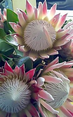 Shade Garden Flowers And Decor Ideas Flores Unusual Flowers, Unusual Plants, Rare Flowers, Exotic Plants, Amazing Flowers, Beautiful Flowers, Flor Protea, Protea Flower, Protea Plant