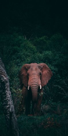 The Effective Pictures We Offer You About animal wallpaper iphone photography A quality picture can Elephant Photography, Wildlife Photography, Animal Photography, Nature Animals, Animals And Pets, Baby Animals, Elephant Love, Elephant Art, Wild Elephant
