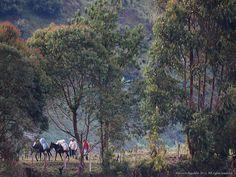Arrieros, Sonson Antioquia