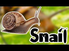 Snails For Kids - YouTube