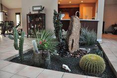 Indoor cactuses